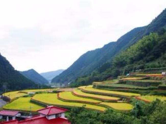 熊本県一の彼岸花の名所