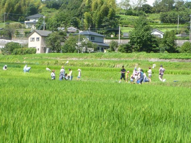 短期講座のご紹介~お米作りにお料理も~